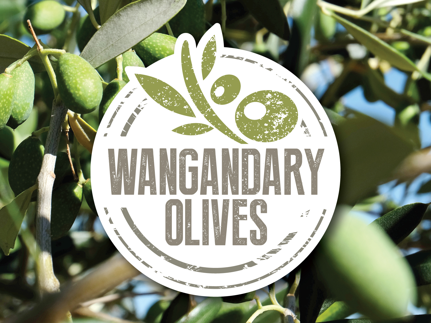Wangandary Olives Logo – Purple Possum Design – Graphic Design Wangaratta
