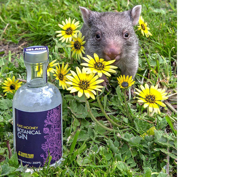 Purple Possum Design – Graphic Design Wangaratta – Kate Mooney Gin